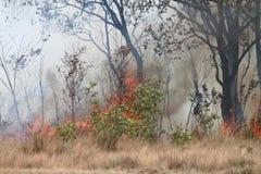 Pożary lasu Zdjęcia Stock