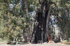 Po Bushfire zdjęcie royalty free
