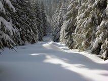 po całym śnieg Zdjęcie Royalty Free