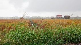 Po Deltapark in Porto Viro, Veneto, Italië: landschap van cou Stock Afbeeldingen