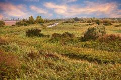 Po Deltaparklandschap in het moerasland van Porto Tolle, Rovigo, V Stock Afbeelding