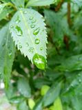 Po deszczu Fotografia Royalty Free