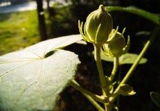 poślubników kwiaty Obraz Stock