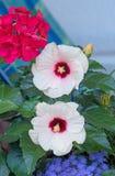 Poślubnika i bodziszka kwiaty Fotografia Stock