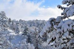 Po śniegu Obrazy Royalty Free