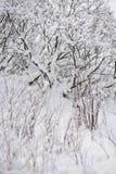 Po opadu śniegu obrazy royalty free