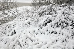 Po opadu śniegu Zdjęcia Royalty Free