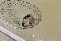 Połowów kraby Obrazy Royalty Free