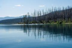 Po pożaru lasu Obrazy Royalty Free