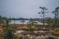 Po środku nigdzie - Latvian bagno Zdjęcie Royalty Free