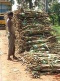 Po tsunami trzcina cukrowa pracownik 2004 Zdjęcia Royalty Free