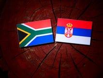 Południe - afrykanin flaga z serb flaga na drzewnym fiszorku Obraz Royalty Free