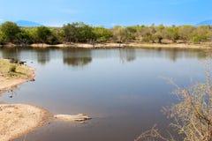 Południe - afrykanin rzeka w UAR i krajobraz Obraz Stock