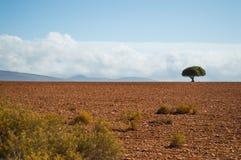 Południe - afrykanina krajobraz z Jeden Osamotnionym drzewem, krzakami i równinami, Fotografia Stock
