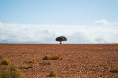 Południe - afrykanina krajobraz z Jeden Osamotnionym drzewem, krzakami i równinami, Zdjęcia Royalty Free
