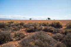Południe - afrykanina krajobraz z Osamotnionymi drzewami, krzakami i równinami, Zdjęcie Stock