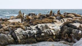 Południowa Afryka foki wyspa Zdjęcia Stock