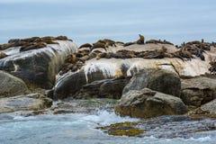 Południowa Afryka foki wyspa Fotografia Stock