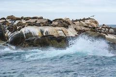 Południowa Afryka foki wyspa Obraz Royalty Free