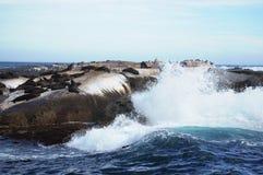 Południowa Afryka foki wyspa Obraz Stock