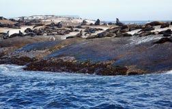 Południowa Afryka foki wyspa Zdjęcie Stock