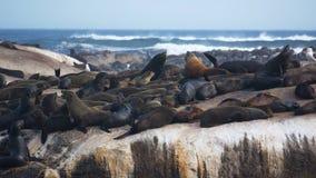 Południowa Afryka foki wyspa Zdjęcia Royalty Free