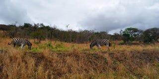 Południowa Afryka, Hluhluwe Imfolozi gry rezerwa, Natal Zdjęcia Stock