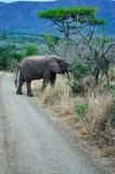 Południowa Afryka, Hluhluwe Imfolozi gry rezerwa, Natal Zdjęcie Royalty Free