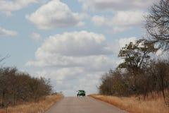 Południowa Afryka safari Obrazy Royalty Free