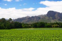Południowa Afryka winnicy doliny krajobraz Zdjęcia Stock
