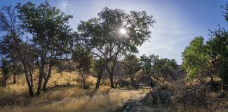 Południowego Kalifornia pustkowia jaru drzewa zdjęcie stock