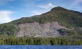 Południowo-wschodni Alaski Clearcut Zdjęcie Royalty Free