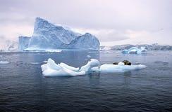 Południowy dennego lwa dosypianie na lodowym floe z lodowami i góry lodowa w raju Ukrywamy, Antarctica Zdjęcie Stock
