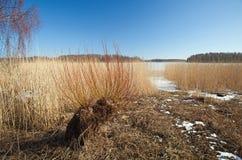 Południowy Finlandia, wczesna wiosna Obraz Stock