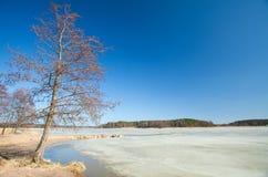 Południowy Finlandia, wczesna wiosna Obraz Royalty Free
