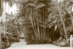 Południowy Floryda hotelu podwórze Fotografia Royalty Free