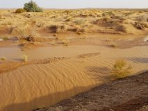 Po ulewnego deszczu w pustyni Obrazy Royalty Free