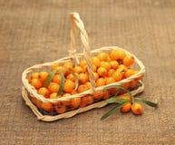 Pożytecznie buckthorn jagody w koszu Obraz Royalty Free