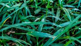 Po zmierzchu na ostrzach trawa obrazy stock