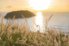 Poaceae κάτω από το ηλιοβασίλεμα και τη θάλασσα Στοκ Εικόνα