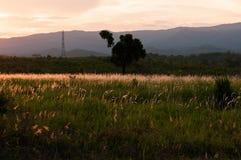 Poaceae en puesta del sol con el fondo de la montaña Fotos de archivo libres de regalías