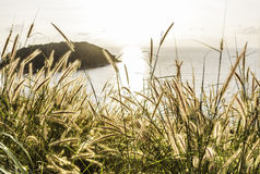 Poaceae sob o por do sol e o mar Foto de Stock