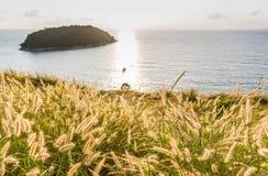 Poaceae under solnedgång och havet arkivfoton