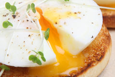 Poached Egg. On a toasted English muffin Royalty Free Stock Images
