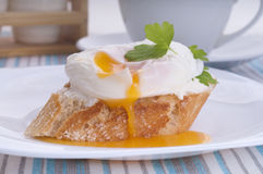 Poached egg Stock Photography