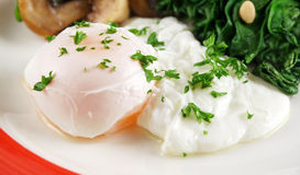 Poached Egg Breakfast Stock Image