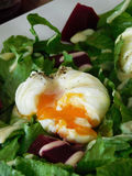 Poached egg with liquid yolk. Close-up. Poached egg with liquid yolk on a green salad leaves. Close-up royalty free stock photography
