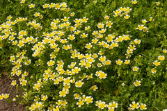 Poached Egg Plant Royalty Free Stock Images