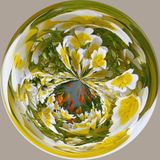 Poached egg plants distorted. A fish eye view of poached egg plants stock photo