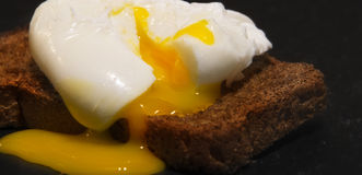 Poached egg on a slice of wholemeal bread Royalty Free Stock Photos